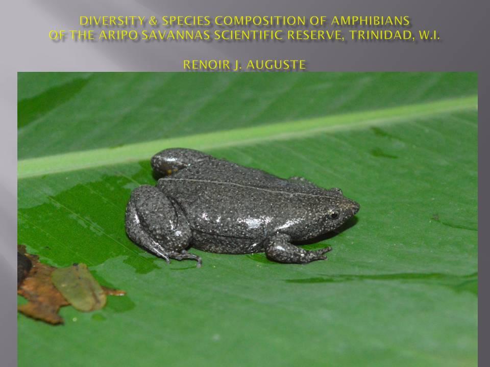 Aripo Savanna Amphibians