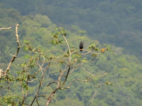 Birding in Brasso Seco